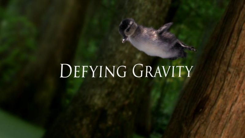 Defying Gravity (Life in the Air 1/3)