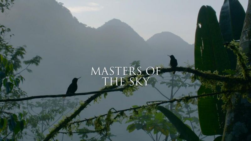 Masters of the Sky (Life in the Air 2/3)