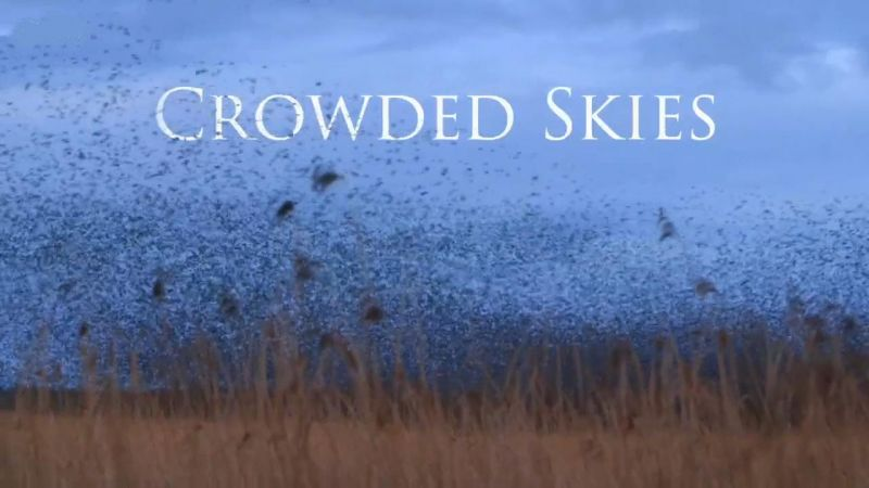 Crowded Skies (Life in the Air 3/3)