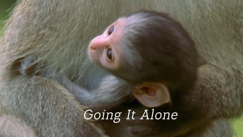 Going It Alone (Animal Super Parents 1/3)