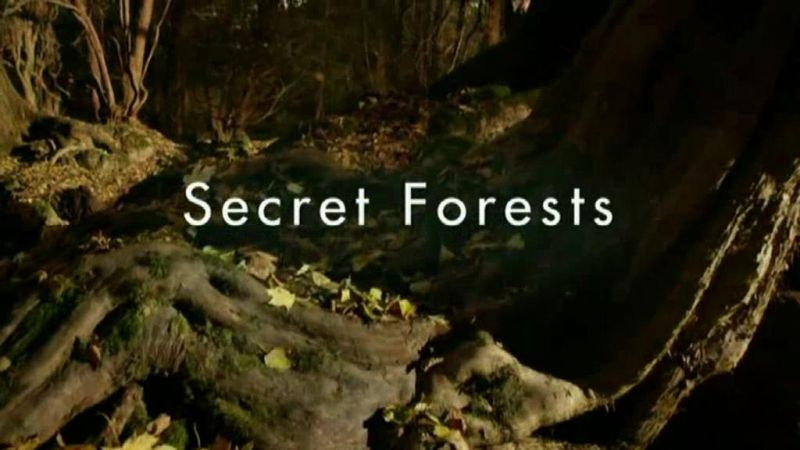Secret Forests