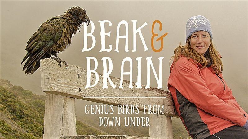 Beak and Brain: Genius Birds from Down Under