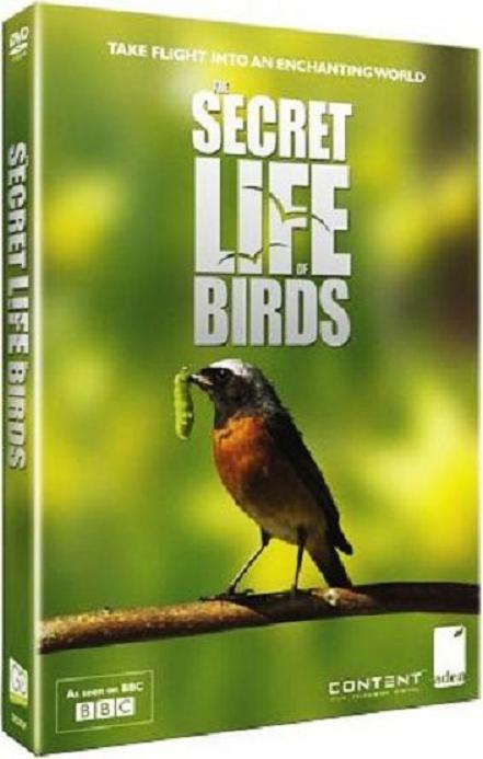 Secret Life Birds 2012 سلسلة