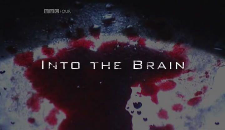Into the Brain