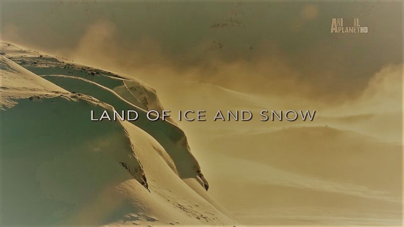 Land of Ice and Snow (Wildest Europe 1/5)