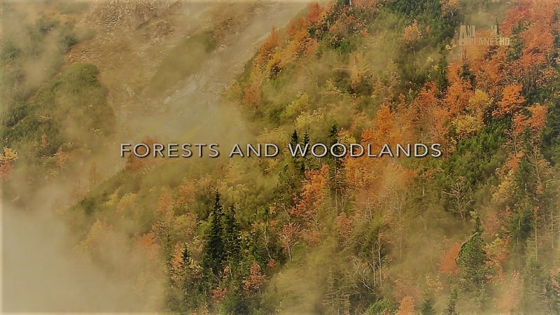 Forest and Woodlands (Wildest Europe 4/5)