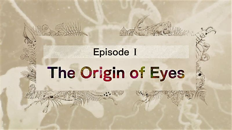The Origin of Eyes
