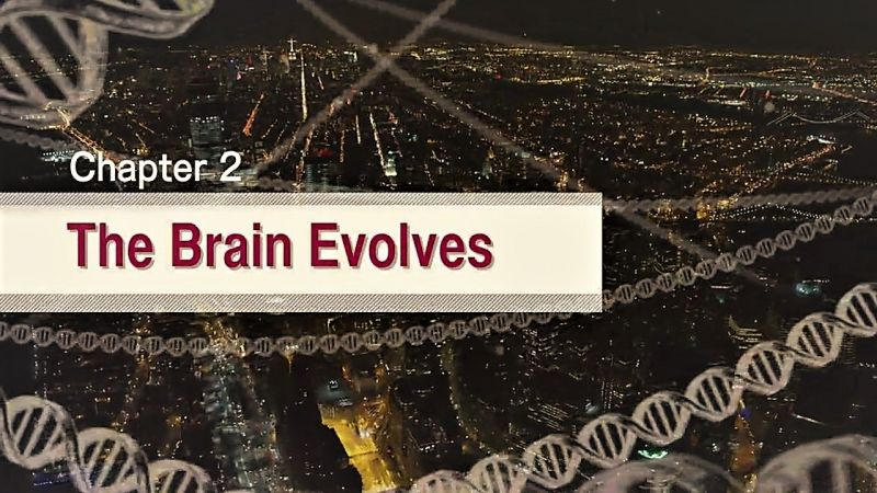 The Brain Evolves