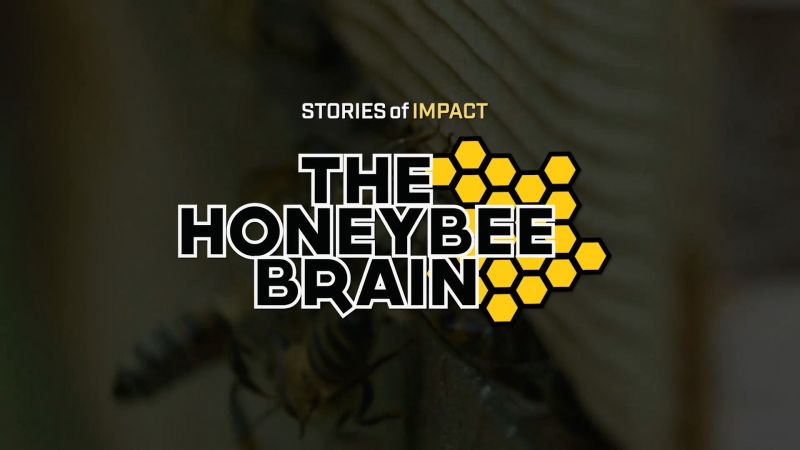 The Honeybee Brain