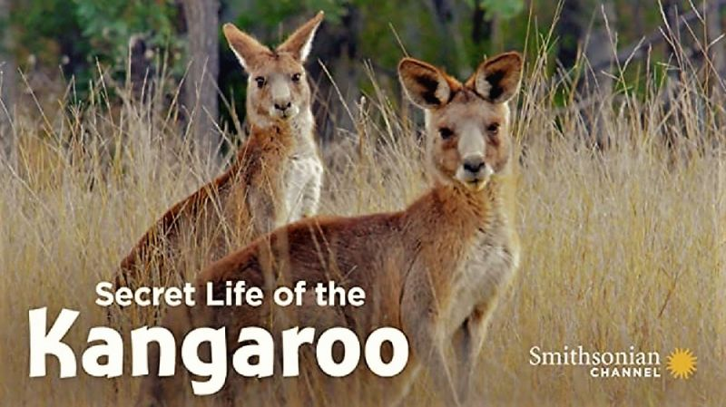 Poster of Secret Life of the Kangaroo Series 1 1of3 Mob Rules 1080p HDTV