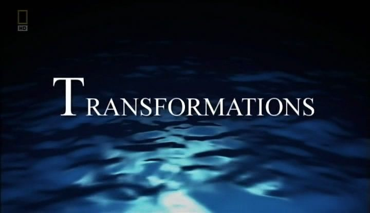 Transformations (Life of Oceans 2/4)