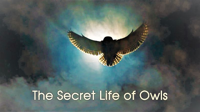 The Secret Life of Owls (The Nature of Things)