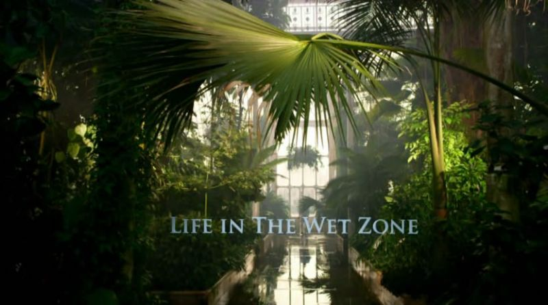 Life in the Wet Zone (Kingdom of Plants 1/3)