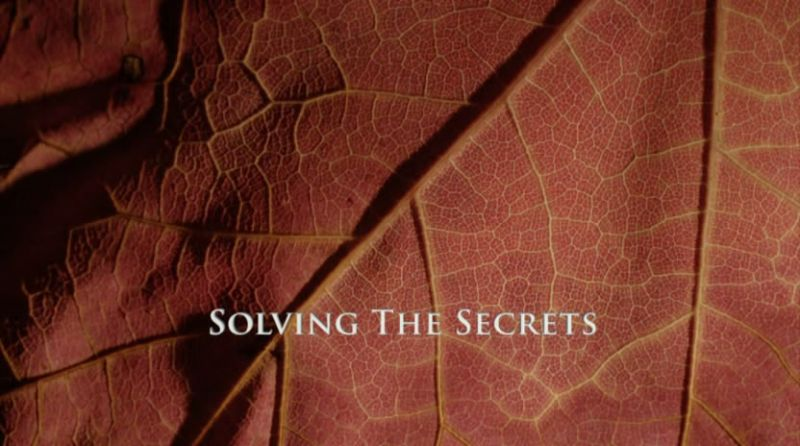 Solving the Secrets (Kingdom of Plants 2/3)
