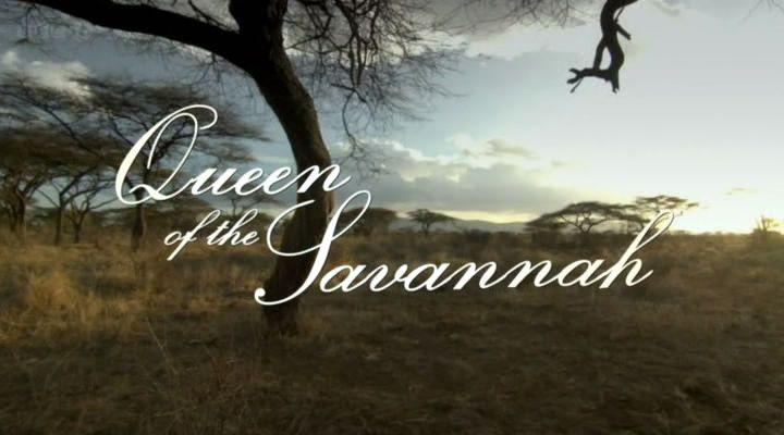 BBC纪录片《自然世界之草原女王》