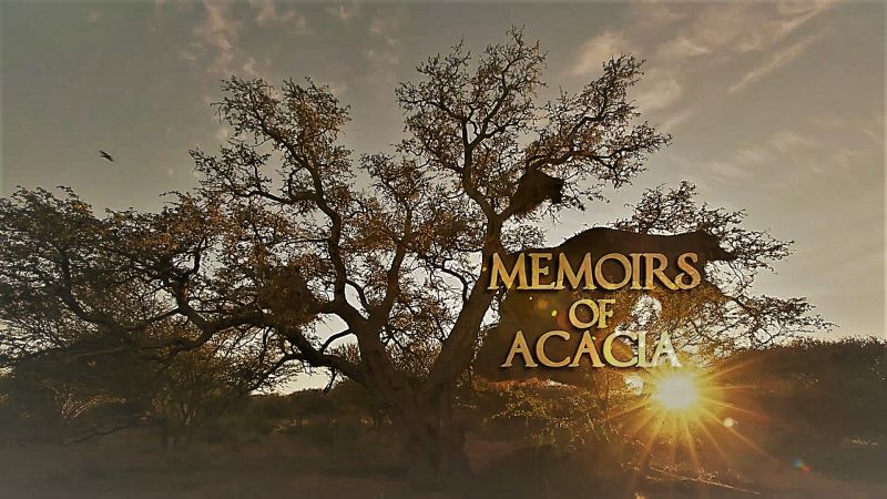 Memoirs of Acacia