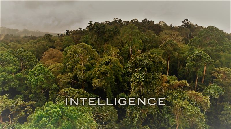Intelligence (Spy in the Wild 2/5)