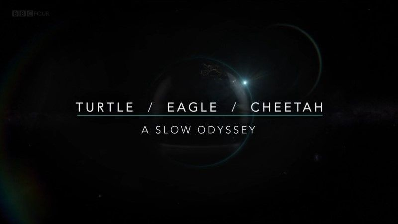 Turtle / Eagle / Cheetah: A Slow Odyssey