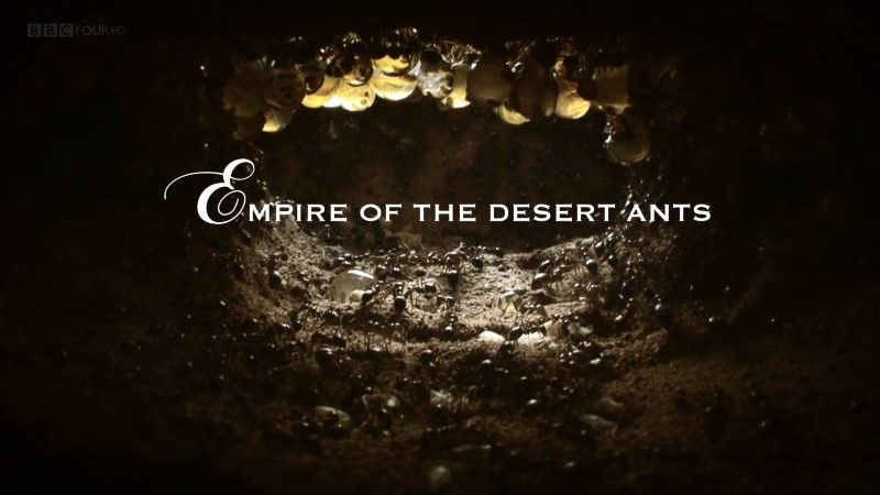 Empire of the Desert Ants (Natural World)