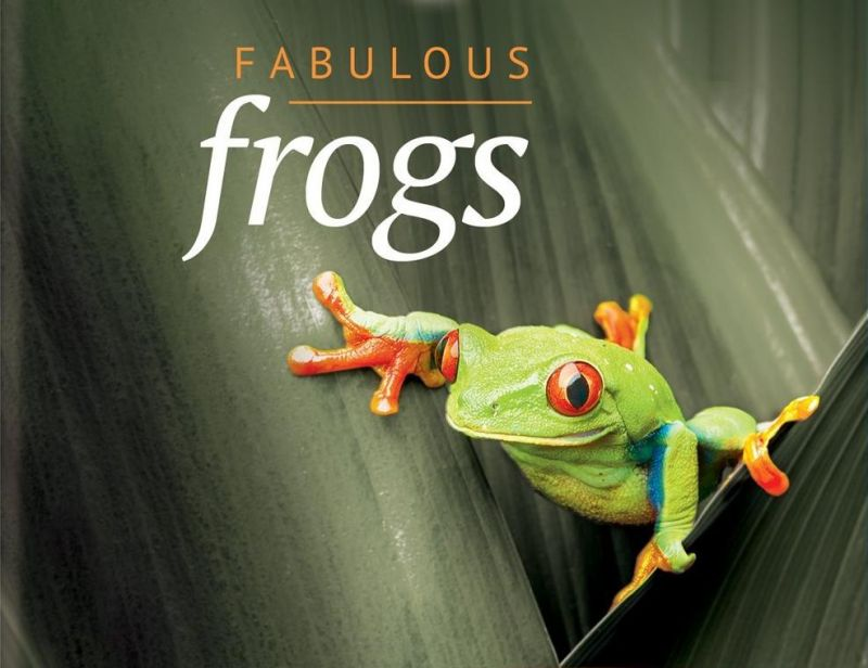 Attenborough's Fabulous Frogs