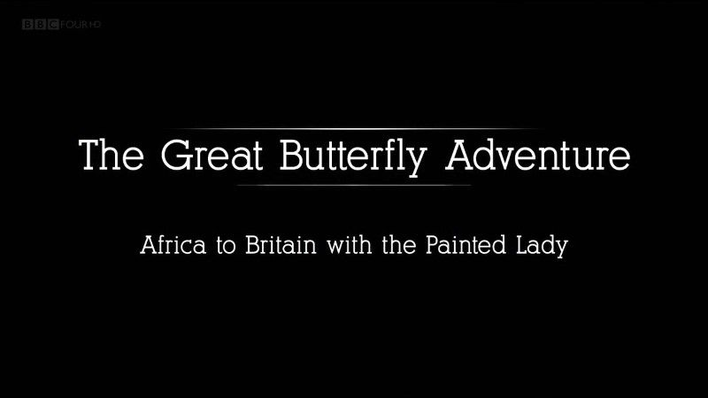 The Great Butterfly Adventure: Africa to Britain with the Painted Lady