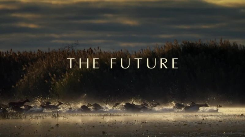 The Future (Africa 6/6)