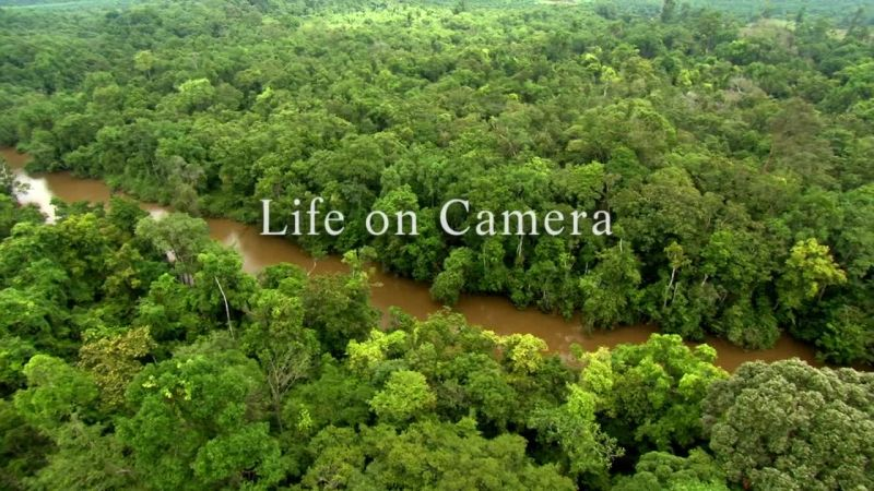 Life on Camera (Attenborough: 60 Years in the Wild 1/3)
