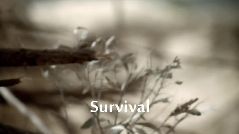 Survival (Andrew Marr's History of the World 1/8)