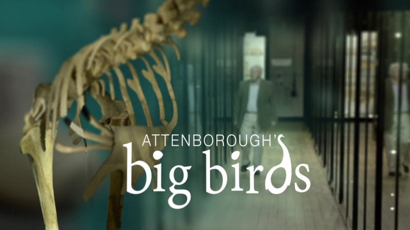 Attenborough's Big Birds (Natural World)