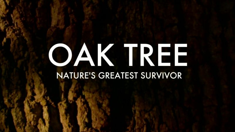 Oak Tree: Nature's Greatest Survivor