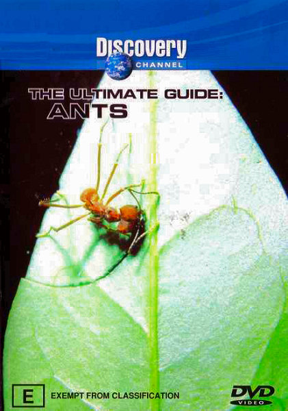 DSC Ants: The Ultimate Guide DivX mp3 (forums mvgroup org) preview 0