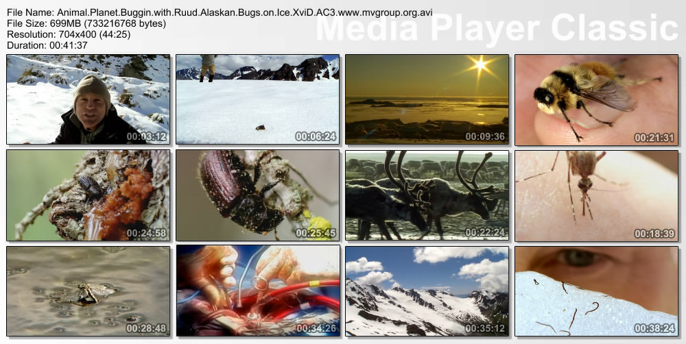Buggin' with Ruud: Alaskan Bugs on Ice DivX AC3 ( preview 5