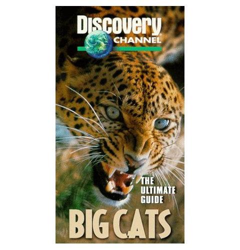 DSC Big Cats: The Ultimate Guide DivX AC3 dual audio ( preview 0
