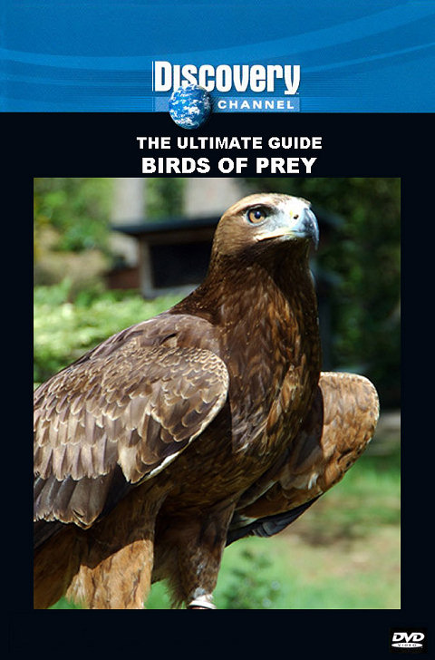 DSC Birds of Prey: The Ultimate Guide DivX AC3 dual audio ( preview 0