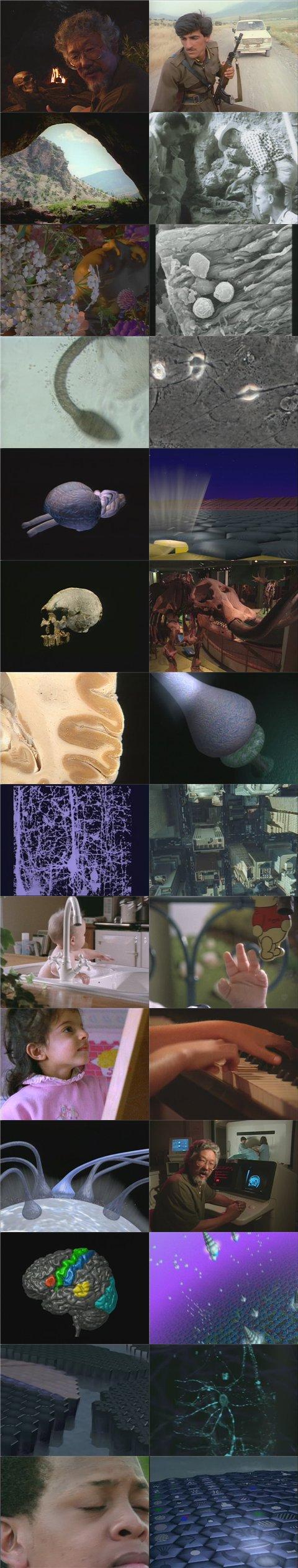 DSC The Brain: Our Universe Within   Evolution DivX AC3 dual audio ( preview 1