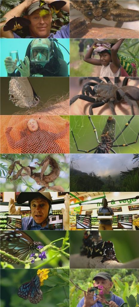 Buggin with Ruud Island of Giant Bugs XviD AC3 MVGroup org avi preview 1