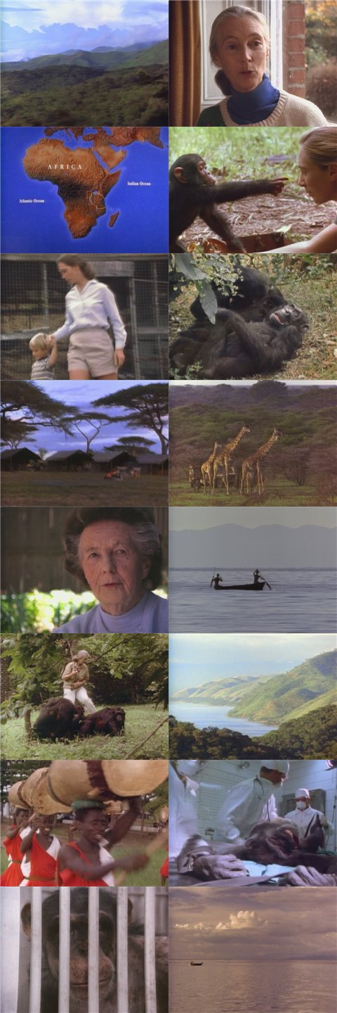 NGC The Life and Legend of Jane Goodall DivX AC3 dual audio ( preview 1
