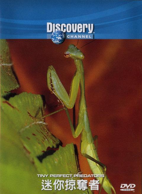 DSC Tiny Perfect Predators: Mantids and Dragonflies DivX AC3 ( preview 0