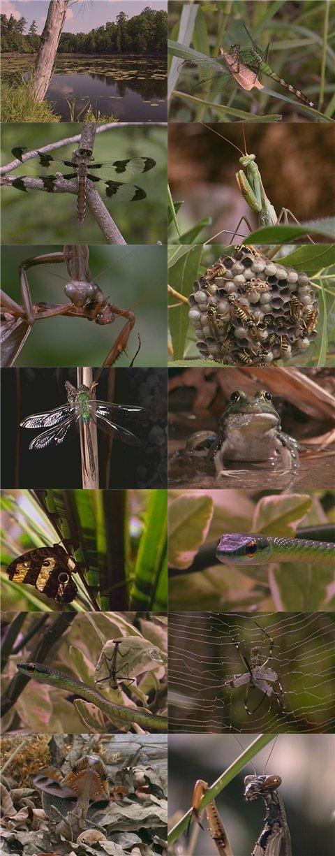 DSC Tiny Perfect Predators: Mantids and Dragonflies DivX AC3 ( preview 3