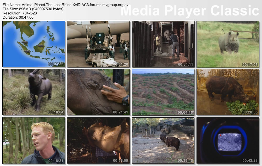 Animal Planet The Last Rhino XviD AC3 (forums mvgroup org) preview 1