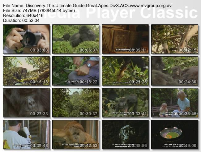 Discovery The Ultimate Guide Great Apes DivX AC3  org avi preview 1