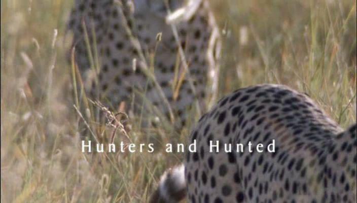 Hunters and Hunted
