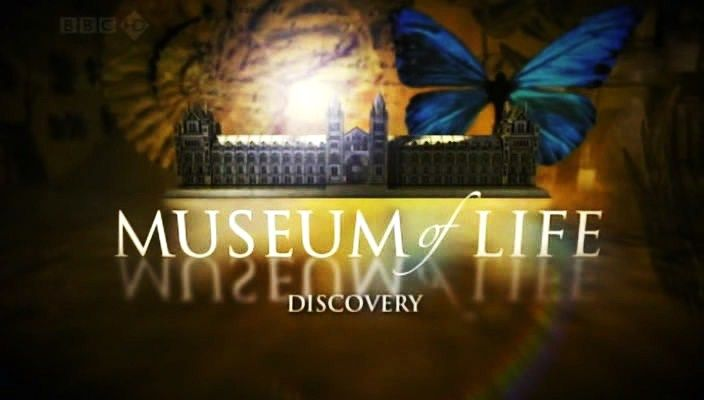 Museum Life 2010 سلسلة متحف