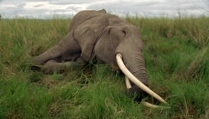 BBC 自然世界 ECHO:无法忘怀的象