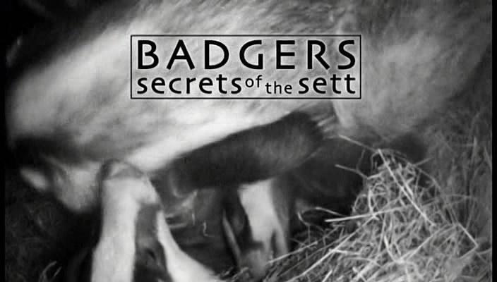 Natural World   Badgers   Secrets of the Sett (15 February 2008) [DVB (Xvid)] preview 0