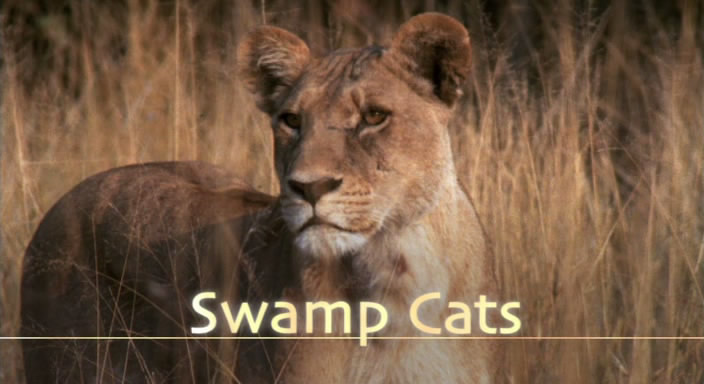 BBC Natural World 2004 Swamp Cats DVB XviD MP3  org avi preview 0