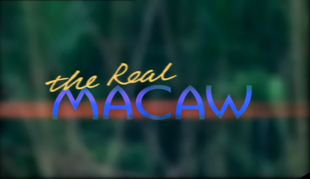 Wildlife on One   The Real Macaw (2000) [TVrip (xvid)] preview 0