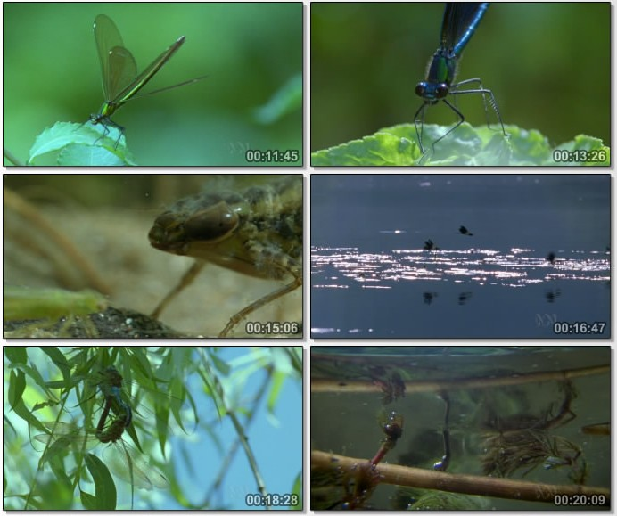 Wildlife on One: Dragonfly   Beauty Or Beast? (22 Dec 2004) [DVB (xvid)] preview 1