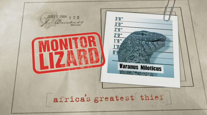Wildlife on One: Monitor Lizard   Africa's Greatest Thief (22 Aug 2004) [DVB (xvid)] preview 0