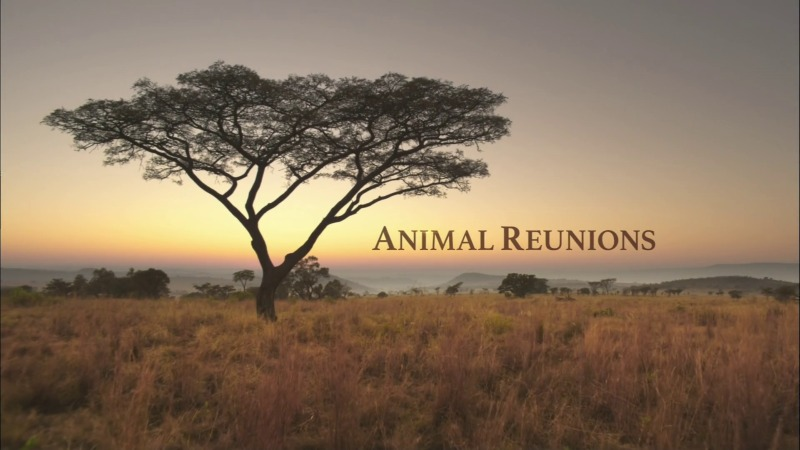 Animal Reunions (PBS Nature)
